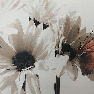 Create Your Own Custom Canvas Prints with Photowall